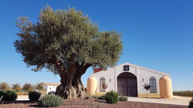 Lagar do Palacio de los olivos